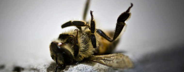 Bee deaths – a ghastly truth revealed!